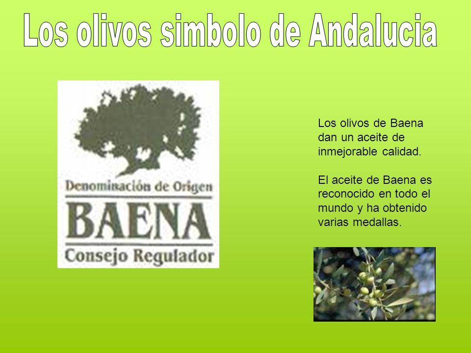 Los olivos de Baena dan un aceite de inmejorable calidad. El aceite de Baena es reconocido en todo el mundo y ha obtenido varias medallas.