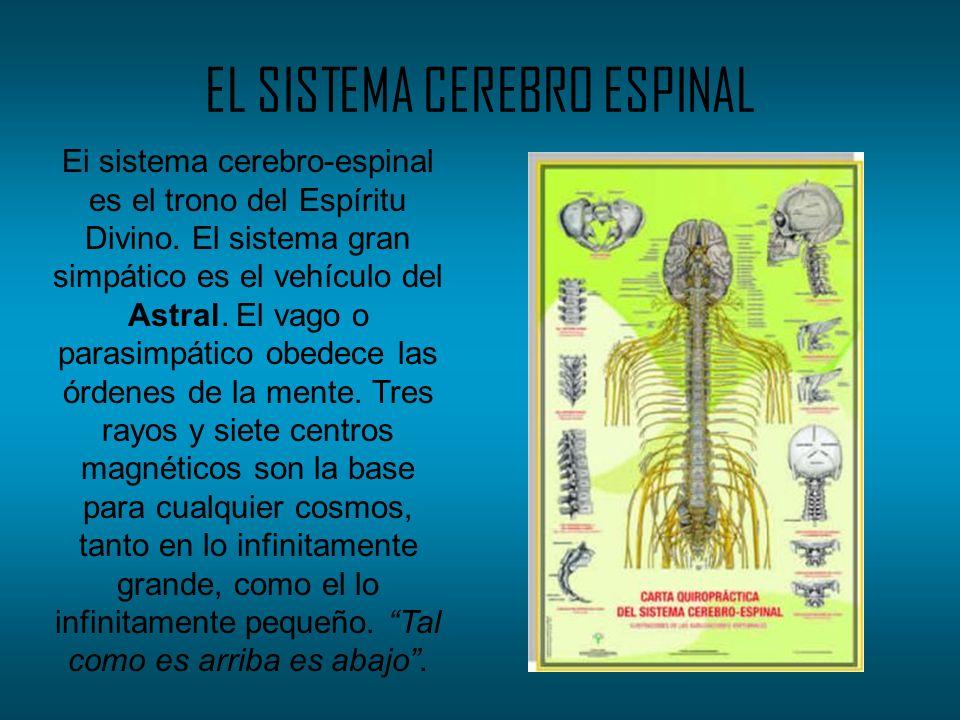 EL SISTEMA CEREBRO ESPINAL Ei sistema cerebro-espinal es el trono del Espíritu Divino. El sistema gran simpático es el vehículo del Astral. El vago o