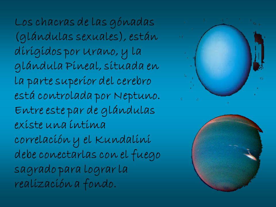Los chacras de las gónadas (glándulas sexuales), están dirigidos por Urano, y la glándula Pineal, situada en la parte superior del cerebro está contro