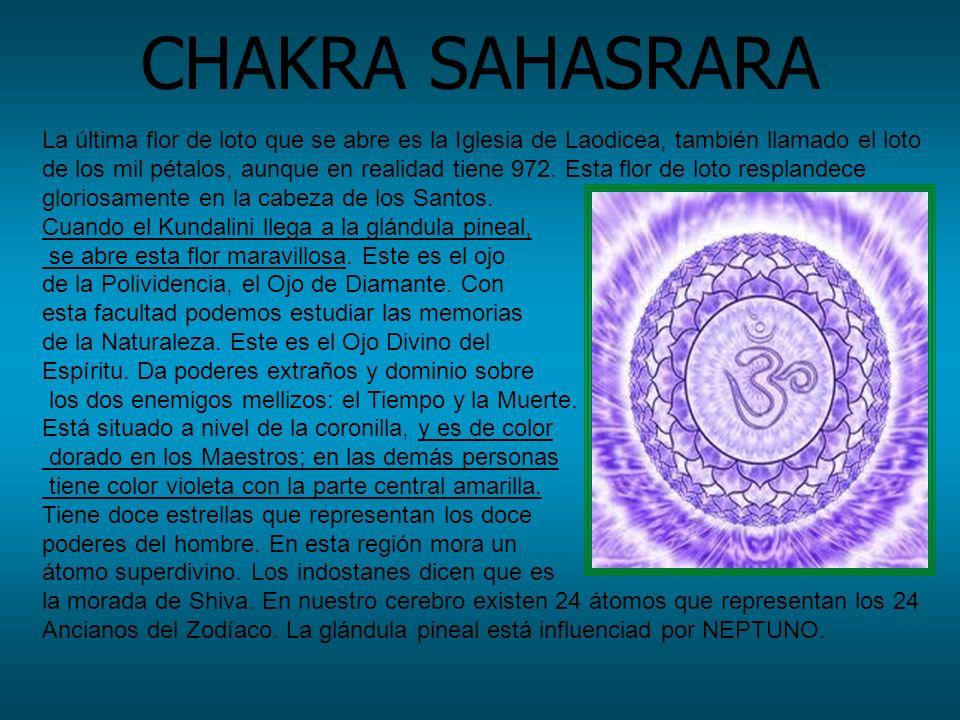 CHAKRA SAHASRARA La última flor de loto que se abre es la Iglesia de Laodicea, también llamado el loto de los mil pétalos, aunque en realidad tiene 97