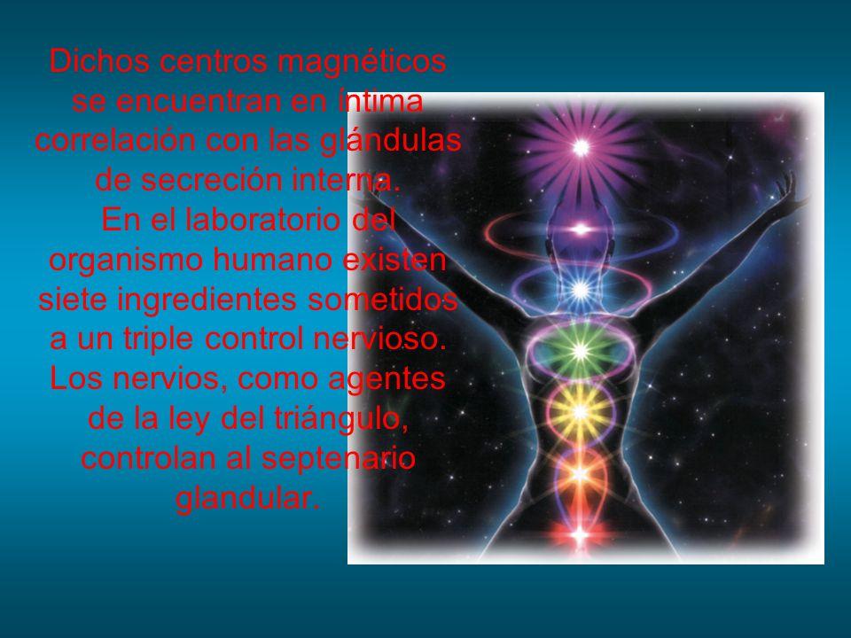 Dichos centros magnéticos se encuentran en íntima correlación con las glándulas de secreción interna. En el laboratorio del organismo humano existen s