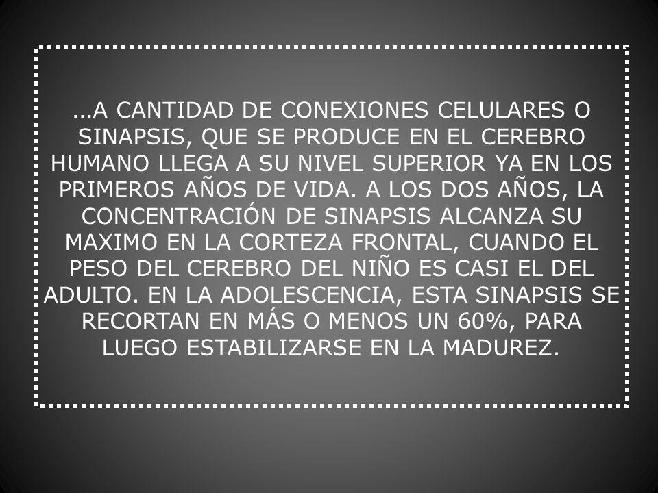 … A CANTIDAD DE CONEXIONES CELULARES O SINAPSIS, QUE SE PRODUCE EN EL CEREBRO HUMANO LLEGA A SU NIVEL SUPERIOR YA EN LOS PRIMEROS AÑOS DE VIDA. A LOS