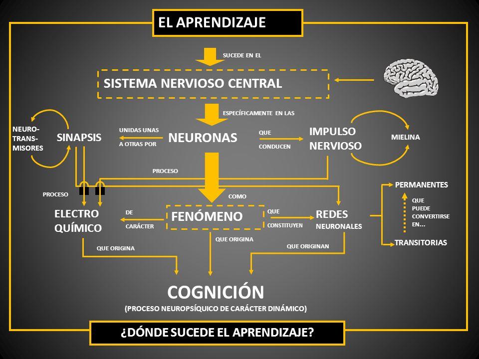 SISTEMA NERVIOSO CENTRAL SUCEDE EN EL NEURONAS FENÓMENO SINAPSIS IMPULSO NERVIOSO ELECTRO QUÍMICO REDES NEURONALES PERMANENTES TRANSITORIAS COGNICIÓN