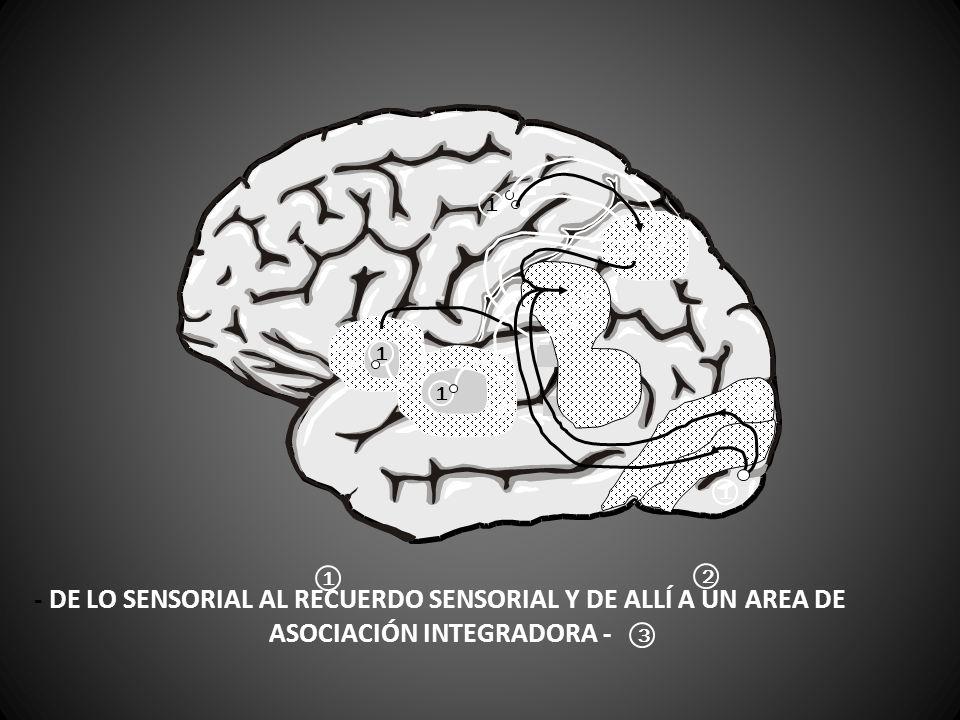 - DE LO SENSORIAL AL RECUERDO SENSORIAL Y DE ALLÍ A UN AREA DE ASOCIACIÓN INTEGRADORA - 1 2 3 1 2 2 2 1 1 2 3 1