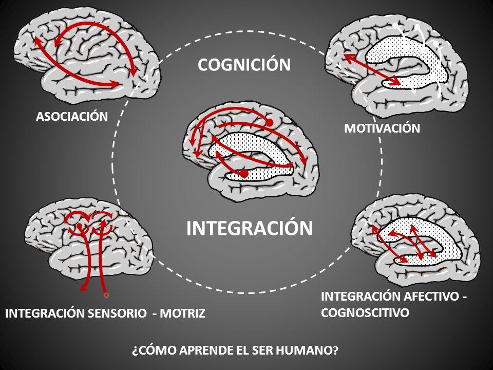 ASOCIACIÓN MOTIVACIÓN INTEGRACIÓN SENSORIO - MOTRIZ INTEGRACIÓN AFECTIVO - COGNOSCITIVO ¿CÓMO APRENDE EL SER HUMANO ? INTEGRACIÓN COGNICIÓN