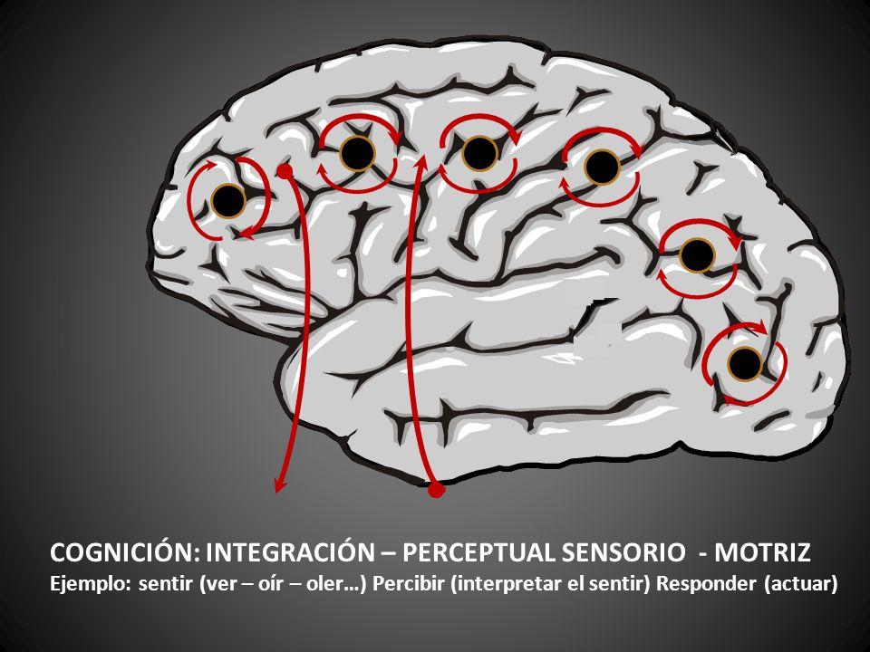 COGNICIÓN: INTEGRACIÓN – PERCEPTUAL SENSORIO - MOTRIZ Ejemplo: sentir (ver – oír – oler…) Percibir (interpretar el sentir) Responder (actuar)