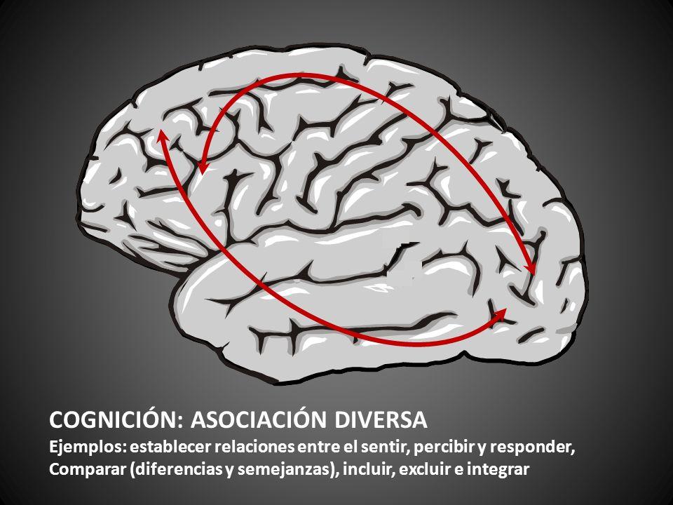 COGNICIÓN: ASOCIACIÓN DIVERSA Ejemplos: establecer relaciones entre el sentir, percibir y responder, Comparar (diferencias y semejanzas), incluir, exc