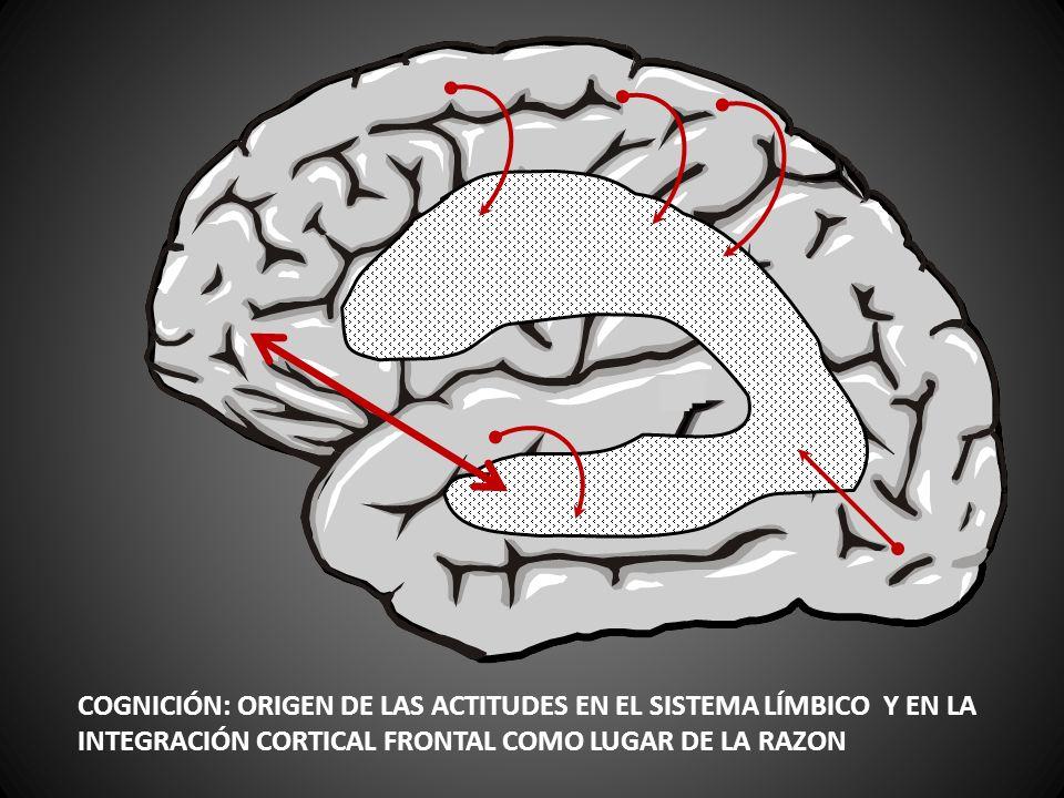 COGNICIÓN: ORIGEN DE LAS ACTITUDES EN EL SISTEMA LÍMBICO Y EN LA INTEGRACIÓN CORTICAL FRONTAL COMO LUGAR DE LA RAZON