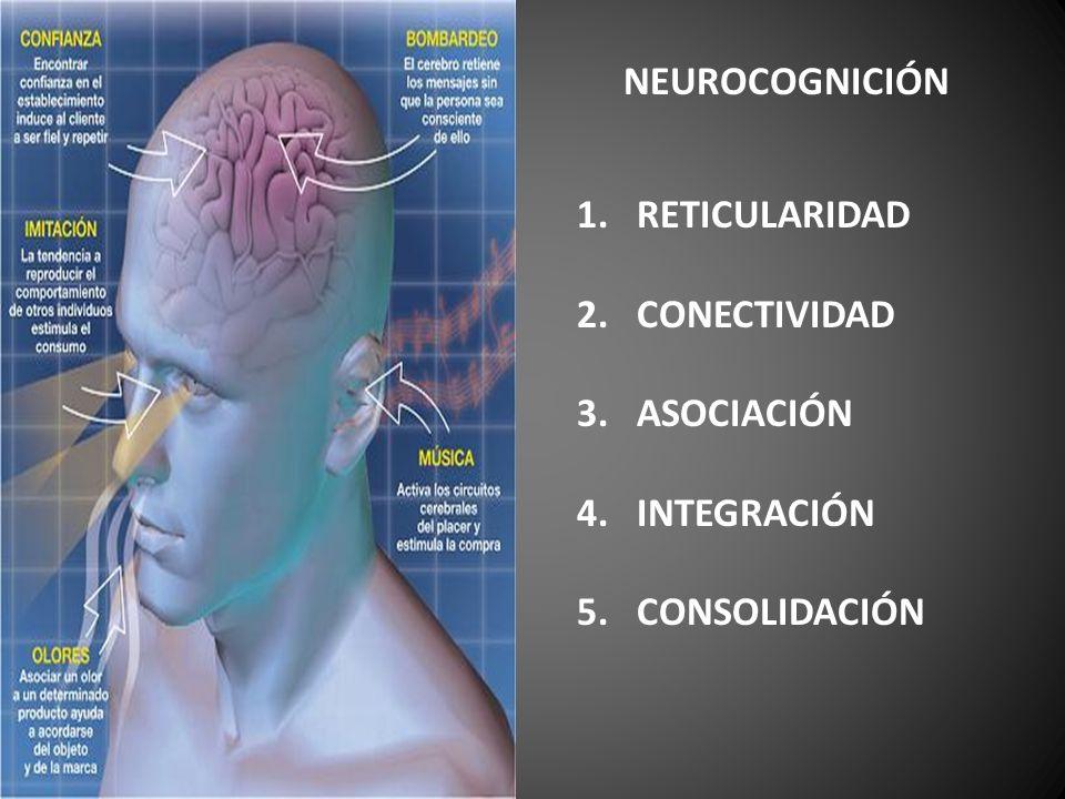 NEUROCOGNICIÓN 1.RETICULARIDAD 2.CONECTIVIDAD 3.ASOCIACIÓN 4.INTEGRACIÓN 5. CONSOLIDACIÓN