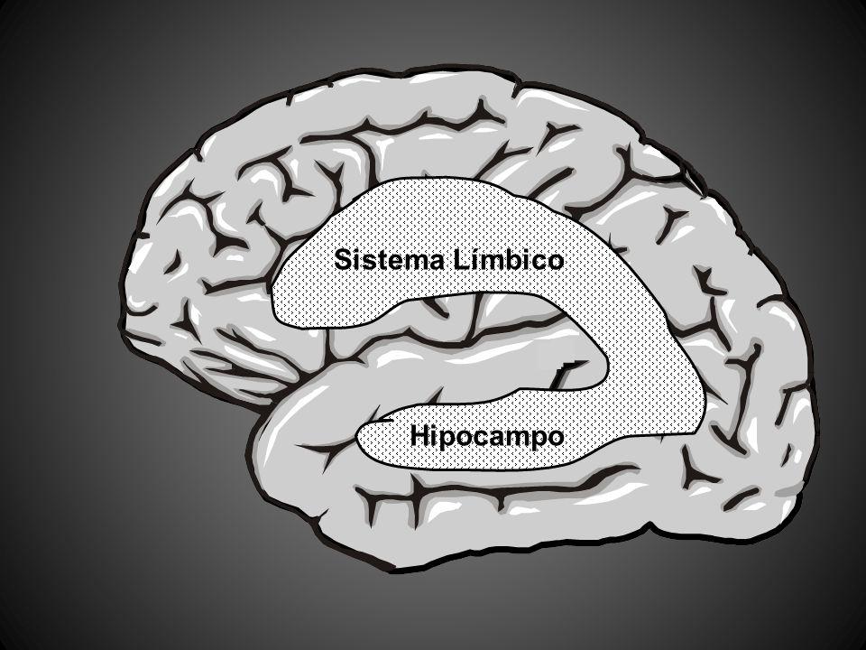 Sistema Límbico Hipocampo