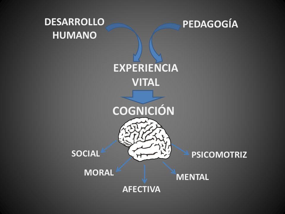 DESARROLLO HUMANO PEDAGOGÍA EXPERIENCIA VITAL COGNICIÓN SOCIAL MORAL AFECTIVA MENTAL PSICOMOTRIZ