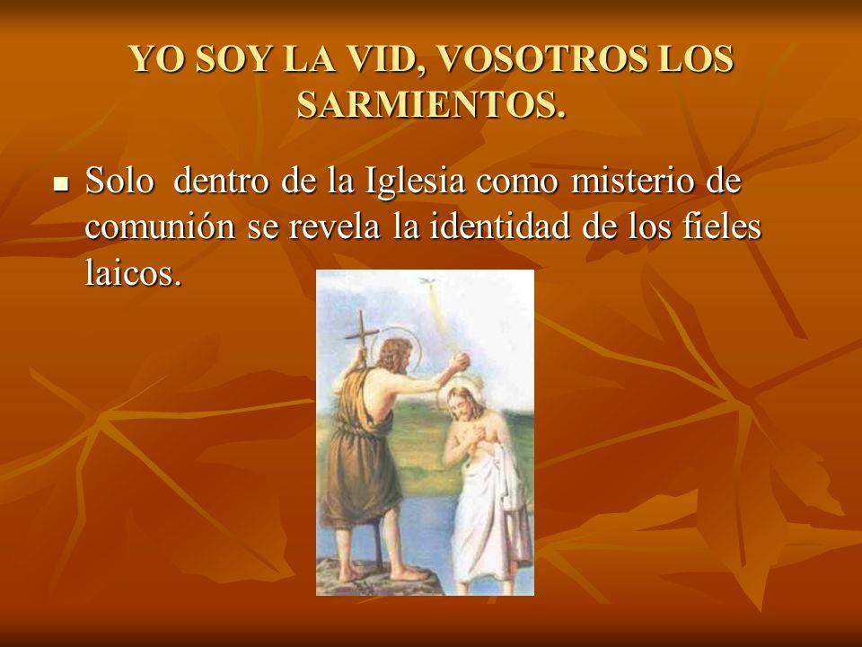 YO SOY LA VID, VOSOTROS LOS SARMIENTOS. Solo dentro de la Iglesia como misterio de comunión se revela la identidad de los fieles laicos. Solo dentro d