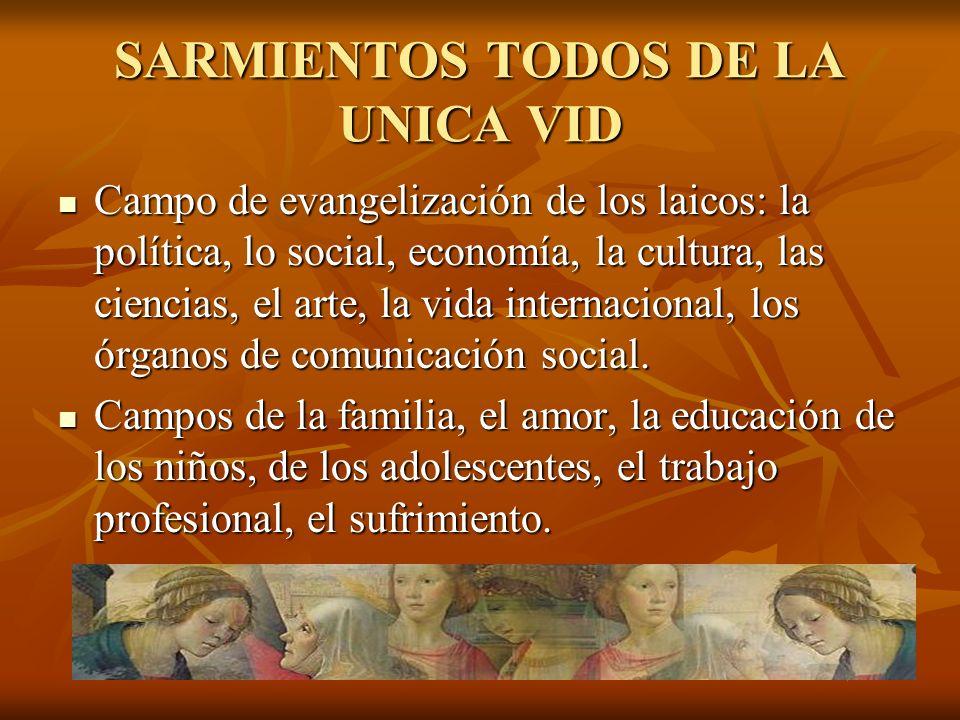 SARMIENTOS TODOS DE LA UNICA VID Campo de evangelización de los laicos: la política, lo social, economía, la cultura, las ciencias, el arte, la vida i