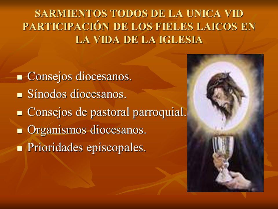 SARMIENTOS TODOS DE LA UNICA VID PARTICIPACIÓN DE LOS FIELES LAICOS EN LA VIDA DE LA IGLESIA Consejos diocesanos. Consejos diocesanos. Sínodos diocesa