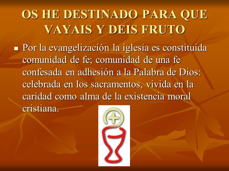 OS HE DESTINADO PARA QUE VAYAIS Y DEIS FRUTO Por la evangelización la iglesia es constituida comunidad de fe; comunidad de una fe confesada en adhesió