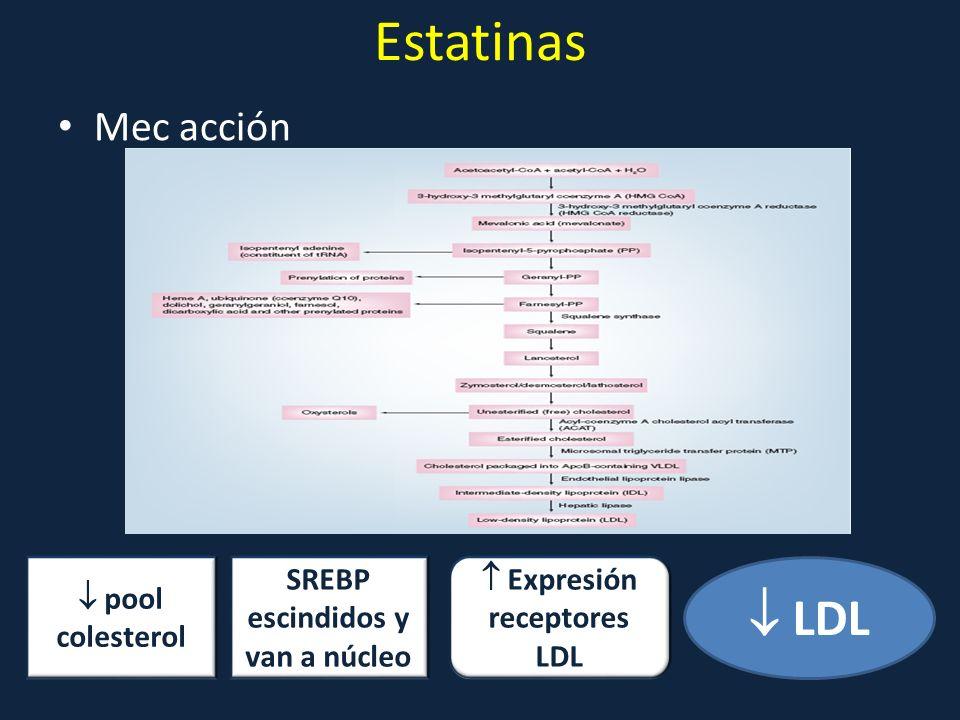 Estatinas Mec acción pool colesterol Expresión receptores LDL LDL SREBP escindidos y van a núcleo
