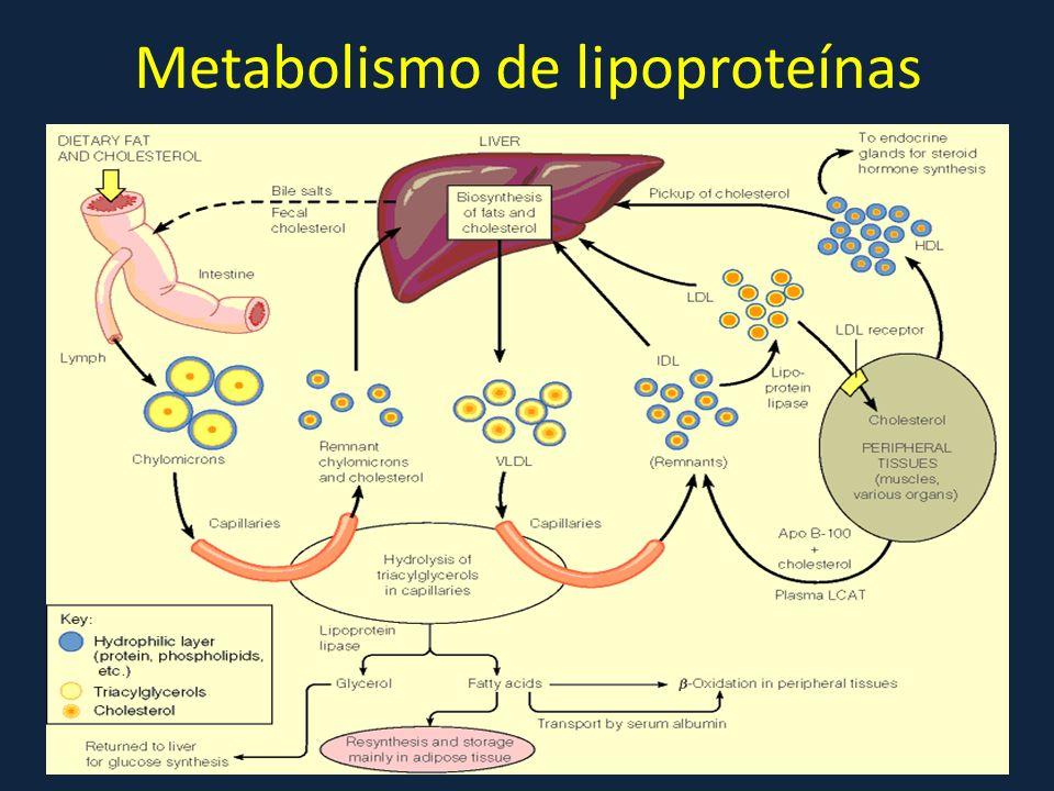 Metabolismo de lipoproteínas