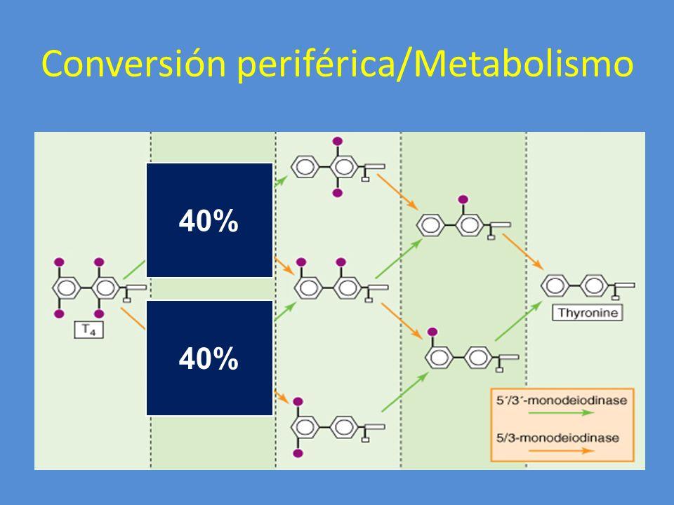 Conversión periférica/Metabolismo 40%