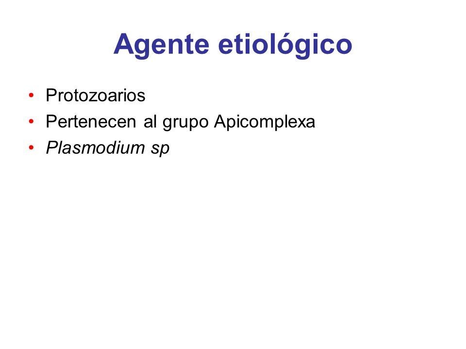 Agente etiológico P.falciparum * P. vivax* P. ovale P.