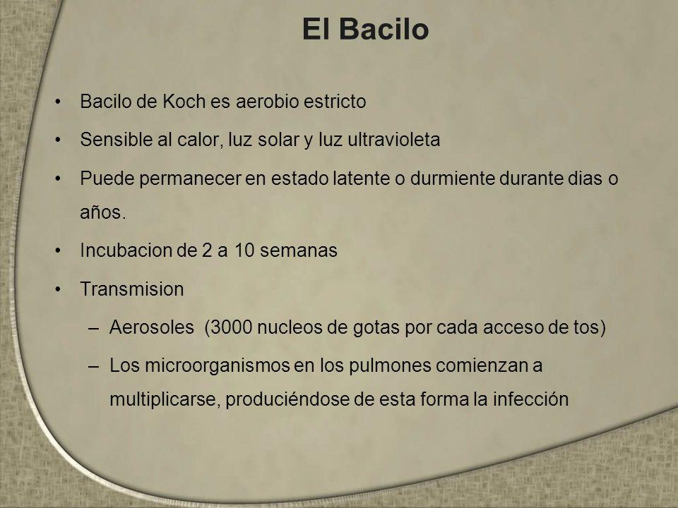 El Bacilo Bacilo de Koch es aerobio estricto Sensible al calor, luz solar y luz ultravioleta Puede permanecer en estado latente o durmiente durante di