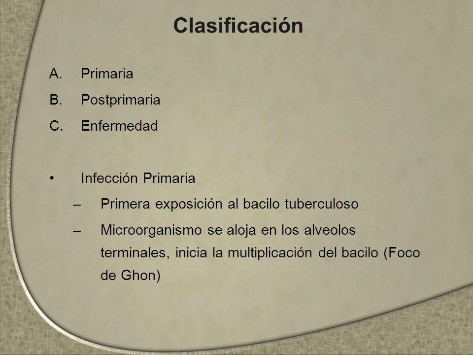 Clasificación A.Primaria B.Postprimaria C.Enfermedad Infección Primaria –Primera exposición al bacilo tuberculoso –Microorganismo se aloja en los alve