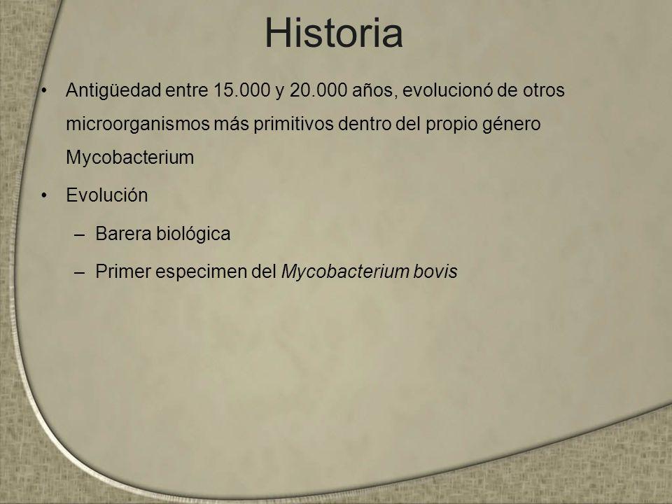 Historia Antigüedad entre 15.000 y 20.000 años, evolucionó de otros microorganismos más primitivos dentro del propio género Mycobacterium Evolución –B