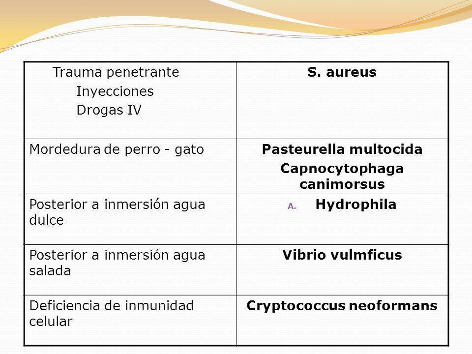 Trauma penetrante Inyecciones Drogas IV S. aureus Mordedura de perro - gatoPasteurella multocida Capnocytophaga canimorsus Posterior a inmersión agua