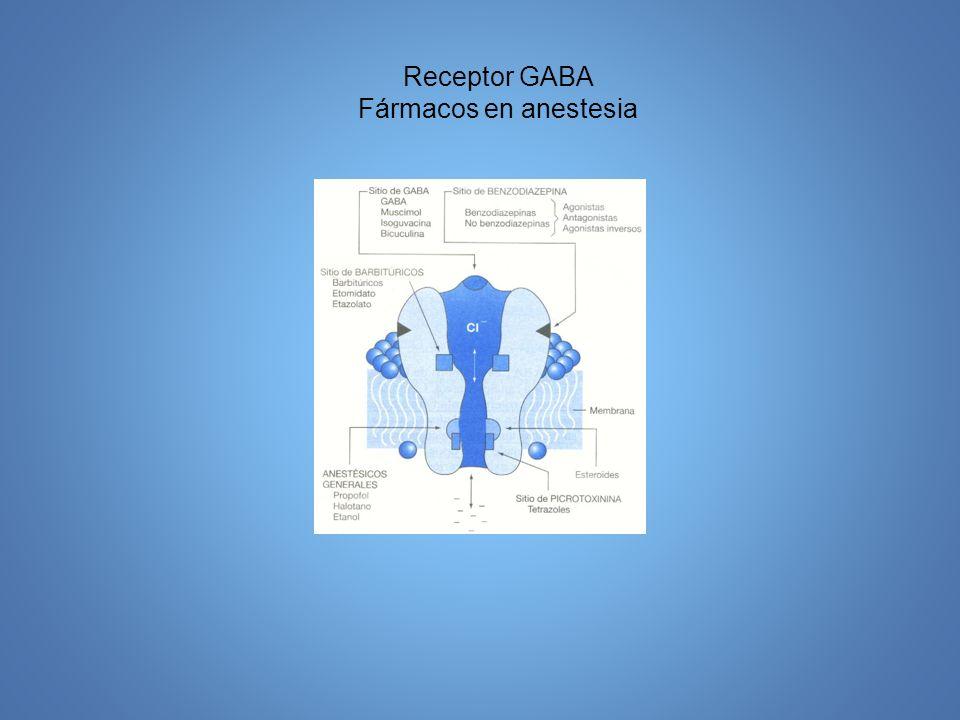 Sitios de acción de los anestésicos generales Neuronas periféricas, cordón espinal, tallo cerebral, tálamo e hipocampo, corteza cerebral.