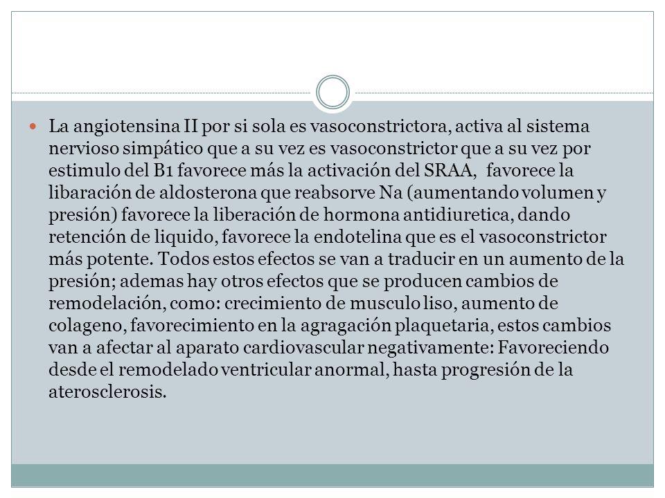 La angiotensina II por si sola es vasoconstrictora, activa al sistema nervioso simpático que a su vez es vasoconstrictor que a su vez por estimulo del