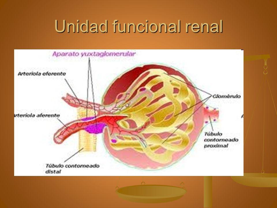 Unidad funcional renal