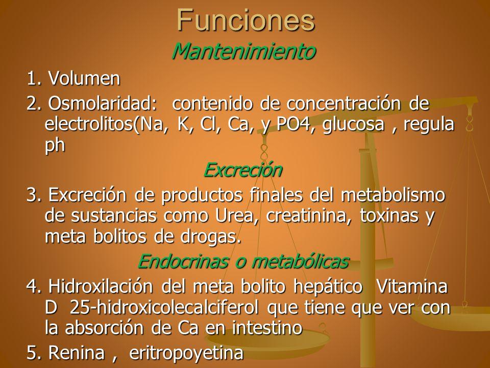 FuncionesMantenimiento 1. Volumen 2. Osmolaridad: contenido de concentración de electrolitos(Na, K, Cl, Ca, y PO4, glucosa, regula ph Excreción 3. Exc