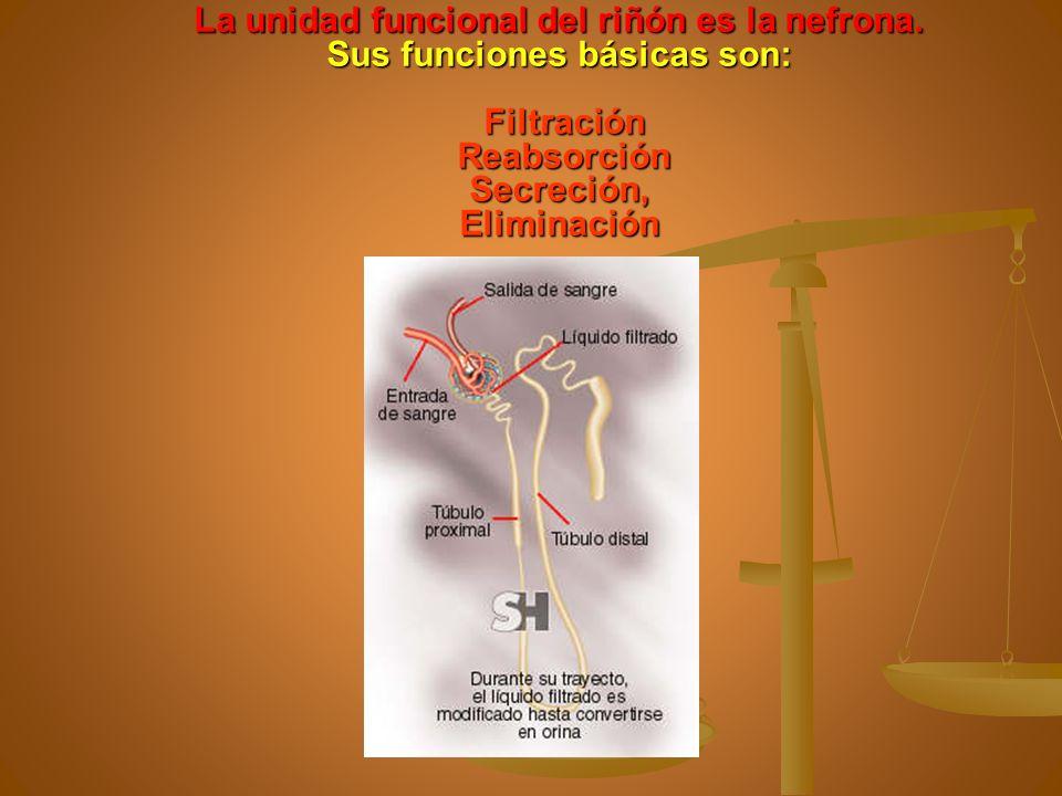La unidad funcional del riñón es la nefrona. Sus funciones básicas son: Filtración Reabsorción Secreción, Eliminación