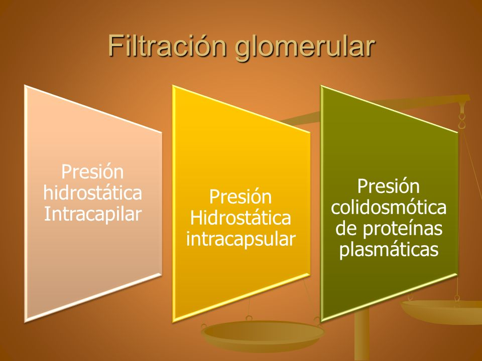 Filtración glomerular Presión hidrostática Intracapilar Presión Hidrostática intracapsular Presión colidosmótica de proteínas plasmáticas