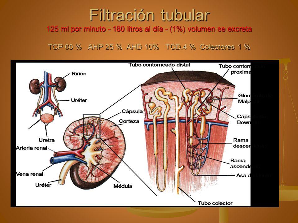Secreción: Se extrae sustancias de la sangre y se añaden al filtrado.