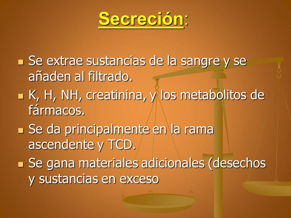 Secreción: Se extrae sustancias de la sangre y se añaden al filtrado. Se extrae sustancias de la sangre y se añaden al filtrado. K, H, NH, creatinina,