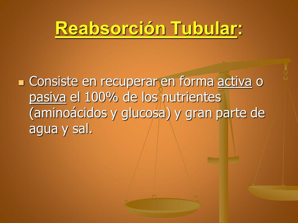 Reabsorción Tubular: Consiste en recuperar en forma activa o pasiva el 100% de los nutrientes (aminoácidos y glucosa) y gran parte de agua y sal. Cons