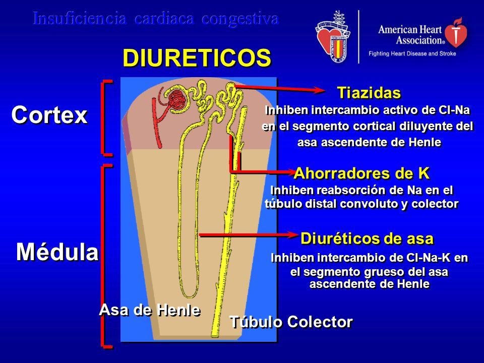 Cortex Médula Tiazidas Inhiben intercambio activo de Cl-Na en el segmento cortical diluyente del asa ascendente de Henle Tiazidas Inhiben intercambio