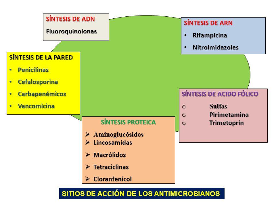 SÍNTESIS DE LA PARED Penicilinas Penicilinas Cefalosporina Cefalosporina Carbapenémicos Carbapenémicos Vancomicina Vancomicina SÍNTESIS DE ADN Fluoroq