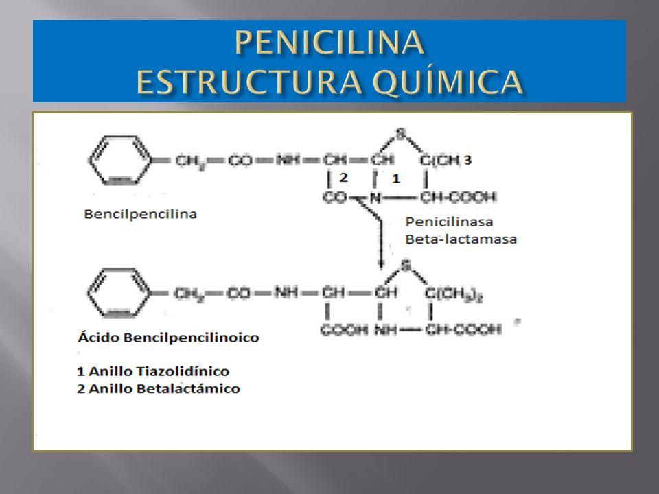 Son antibióticos naturales o semisintéticos Son antibióticos naturales o semisintéticos Estructura betalactámica Actividad bactericida Espectro antimicrobiano Único Único Medio Medio Amplio.