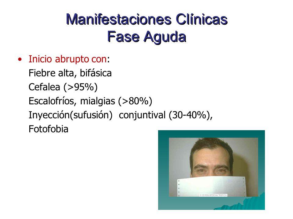 Manifestaciones Clínicas Fase Aguda Inicio abrupto con: Fiebre alta, bifásica Cefalea (>95%) Escalofríos, mialgias (>80%) Inyección(sufusión) conjunti