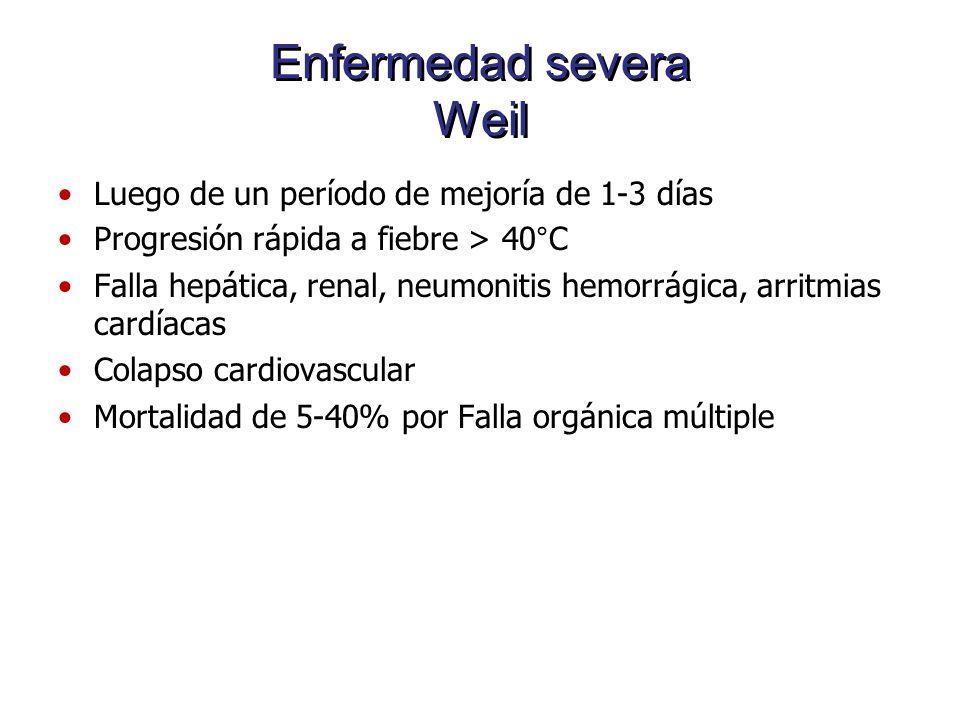 Enfermedad severa Weil Luego de un período de mejoría de 1-3 días Progresión rápida a fiebre > 40°C Falla hepática, renal, neumonitis hemorrágica, arr