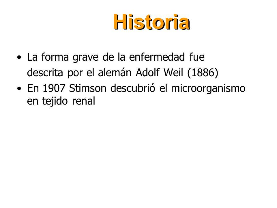 Historia La forma grave de la enfermedad fue descrita por el alemán Adolf Weil (1886) En 1907 Stimson descubrió el microorganismo en tejido renal