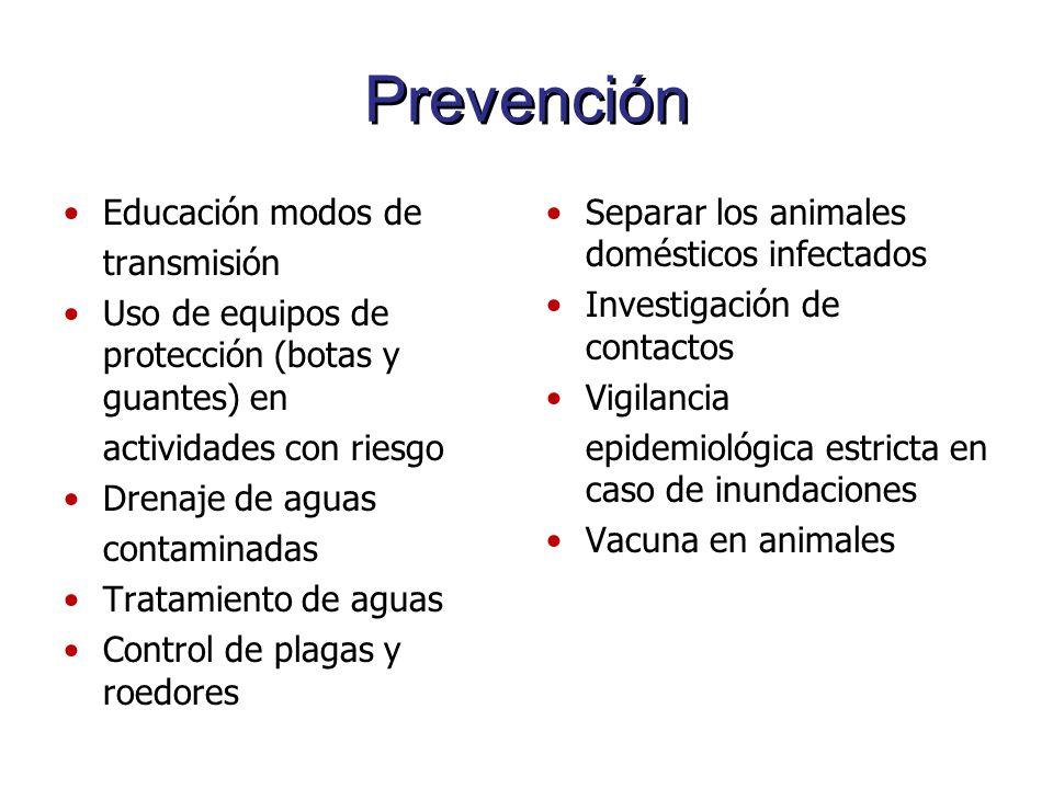 Prevención Educación modos de transmisión Uso de equipos de protección (botas y guantes) en actividades con riesgo Drenaje de aguas contaminadas Trata