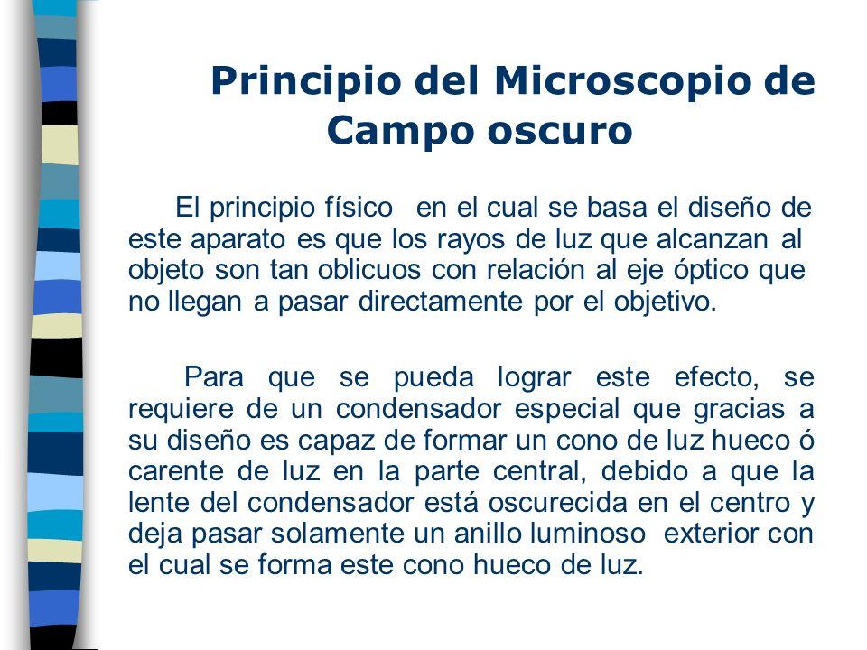 Microscopía de Campo oscuro En los microscopios convencionales se puede conseguir contraste tiñendo las células. Sin embargo, los microscopio ópticos