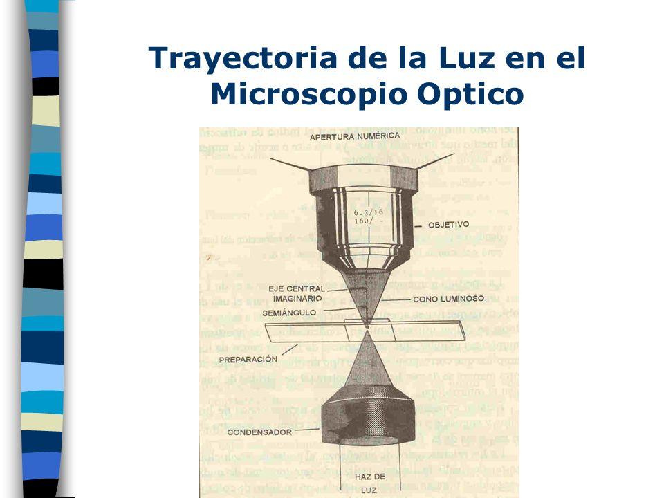 Principio del Microscopio de Campo oscuro El principio físico en el cual se basa el diseño de este aparato es que los rayos de luz que alcanzan al obj