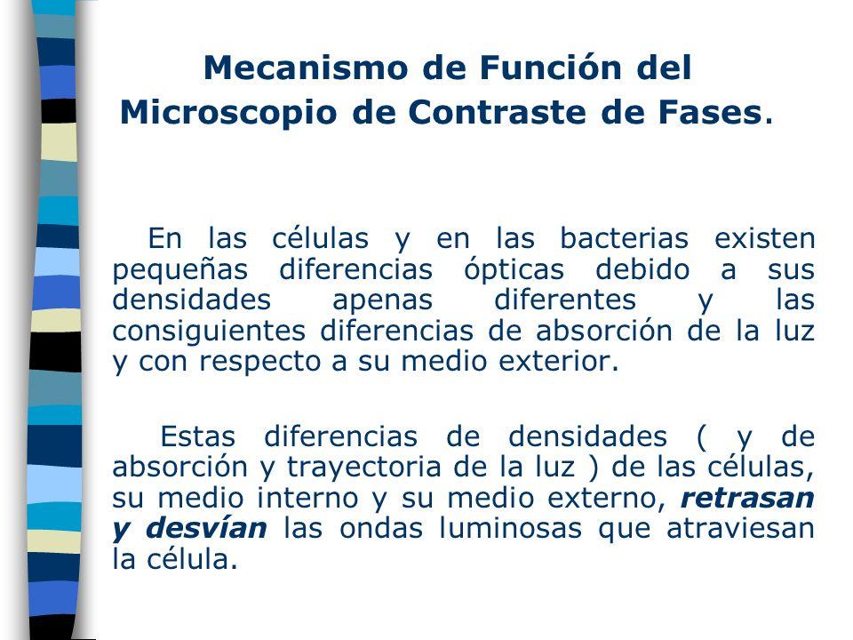 Diafragma Anular del Condensador y Anillo de Fase ó Placa de Difracción Anillo de Fase Lente del Condensador Oscurecida en el Centro