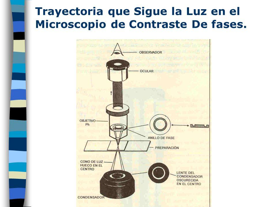 Cono de Luz que Incide sobre el Objetivo en Microscopio Óptico