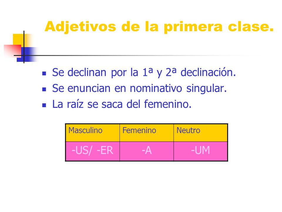 Adjetivos de la primera clase. Se declinan por la 1ª y 2ª declinación. Se enuncian en nominativo singular. La raíz se saca del femenino. MasculinoFeme