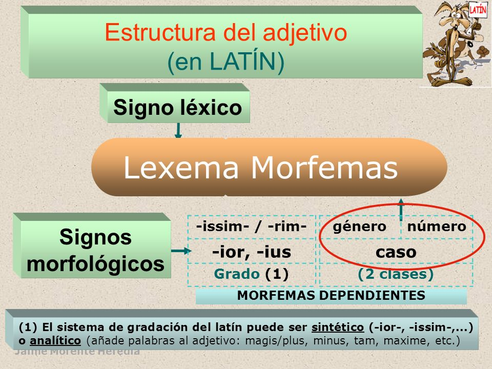 Jaime Morente Heredia Estructura interna del adjetivo (en castellano) Signos morfológicos Signo léxico Morfemas -o,-a/-e,- Ø -os,-as/-es género y núme