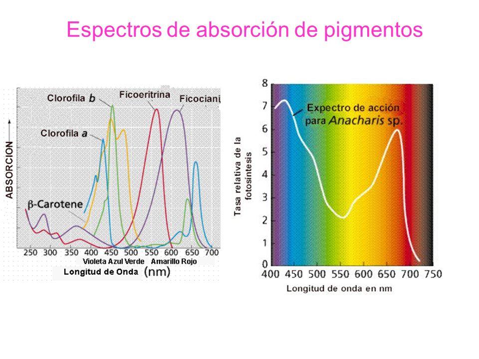 Espectros de absorción de pigmentos